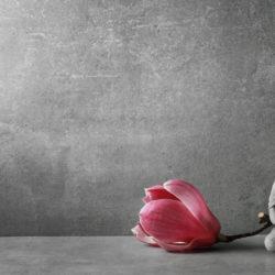 A Meditator's Guide